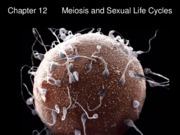 Chapter 13- Meiosis and Sexual Life Cycles