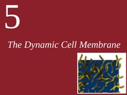 Ch5-The Dynamic Cell Membrane