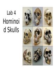 Lab 4 Hominod Skull ppt(1)