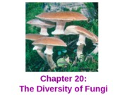 Biology 2 Chapter 2