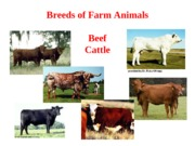 Lecture_2_breeds