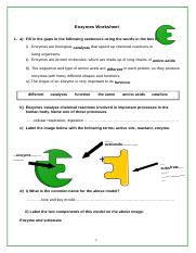 Enzymes Worksheet.docx