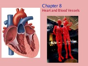 BIO 101 CH 8 Heart and Blood Vessels Notes