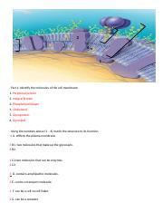 3.2 Cell Membrane Structure and Function Turn In.docx