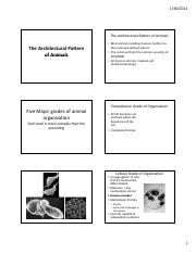 The Architectural Pattern of Animals.pdf