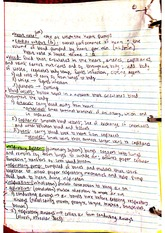 notes on the respiratory system