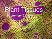 Sept 22 - Plant Tissues (1)