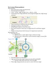 Photosynthesis and Calvin Cycle