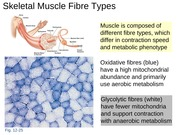 BIO2A03-Muscle Lecture Notes 3a