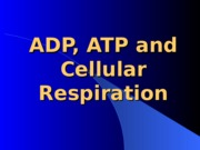 Cell-Lec3-respiration