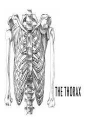 Thorax_Working