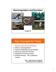16- Chapter 52 - osmoregulation and excretion_NOTES