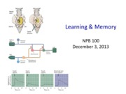 NPB100 19 Learning and Memory UPDATED