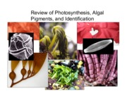 2. Pigments and Photosynthesis (NOT COVERED)
