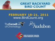 Great Backyard Bird Count 2011