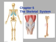 CH 5: The Skeletal System
