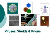 Viruses Viroids and Prions Part 1