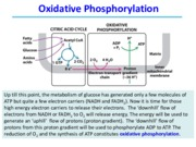 Lecture 24 to 26 Oxidative Phosphorylation - class