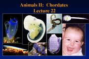 P10- Lecture 22- Animals II