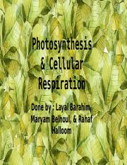 Photosynthesis & Cellular Respiration (1)