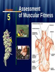 KNR 240 Chapter 5 2012 Muscular Health.ppt