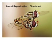 Animal+Reproduction