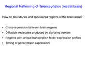 7. Regional patterning of telencephalon(1).pdf