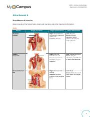 AAP01-Attachment 4 Breakdown of muscles.pdf