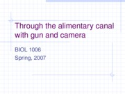RThrough the alimentary canal with gun and camera