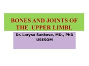Bones and Joints of UL