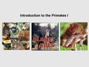 12_Primate_intro_complete_SHORTENED
