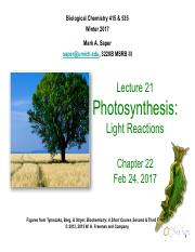 Lecture21_Photosynthesis_Feb24_Saper_FINALv2.pdf