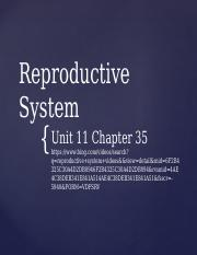 Unit 11 Chapter 35 - The Reproductive System.pptx