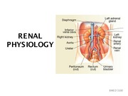 Renal+Physiology
