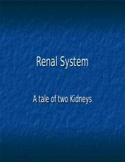 Renal System.ppt