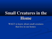 small_creatures_in_the_home