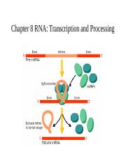 Chapter 8 Transcription in Eukaryotes.ppt