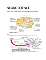 2_Intro to Brain Note