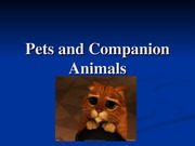 Pet Co Animals F 2014