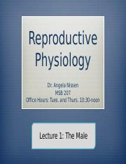 24 3120 Lecture 1 Male Reproductive System OWL