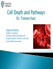 Cell Death and Pathways