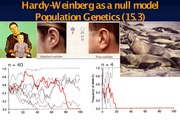 PF14-Lecture 20- Hardy-Weinberg-Oct.20