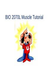 BIO+2070L+Muscle+Tutorial (1).ppt