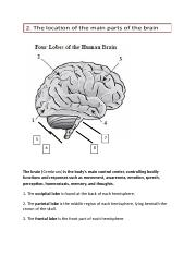 EOC Review Parts of the brain review