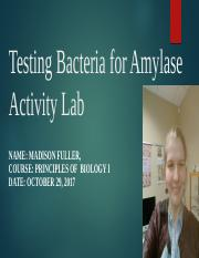 Testing Bacteria for Amylase Activity Lab.pptx