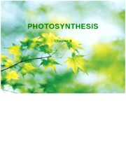 Chapter 8 Photosynthesis