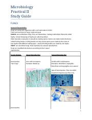 Lab Practical 2._ Study Guide Answers_ from Protozoans and Fungi