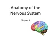 Chapter 3 Structure of Nervous System.pdf