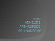 Annelids arthropods echinoderms