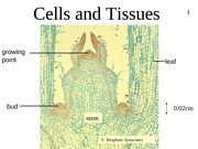 1-cells-tissues